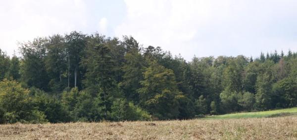 Pronájem opavských městských lesů