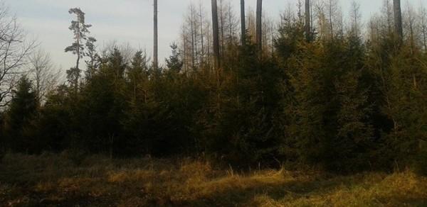 1535023_MLO_mladé stromky-ořez
